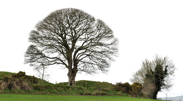 Tree, the Giant's Ring, Belfast