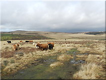 SK2773 : Highland cattle and walkers by Peter Barr