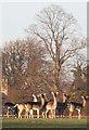 TL8063 : Wary fallow deer by Bob Jones