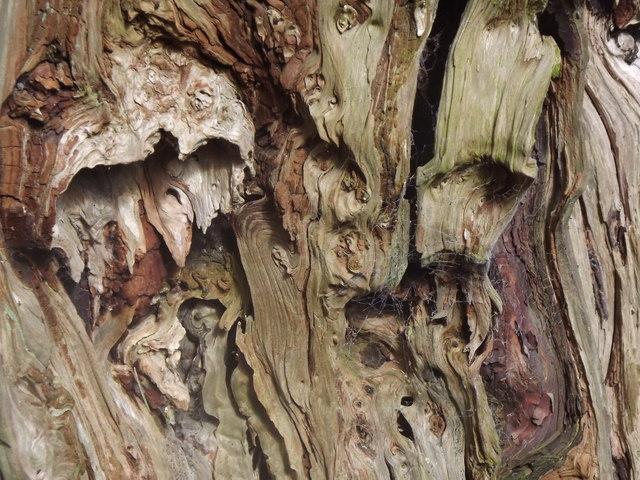 The Inner Yew