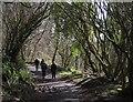 SX7780 : On Lustleigh Cleave by Derek Harper