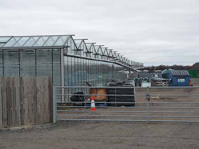 Greenhouses at Earsdon Plants