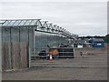 NZ3273 : Greenhouses at Earsdon Plants by Oliver Dixon