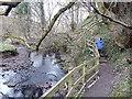 NZ3374 : Footpath down Holywell Dene by Oliver Dixon