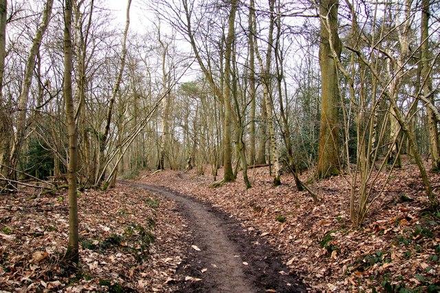 Bridleway through Hen Wood