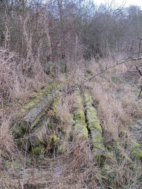 Posts in the moss