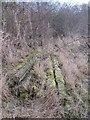 SU5086 : Posts in the moss by Bill Nicholls