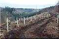 NT2158 : Tree planting at Penicuik Estate by Jim Barton