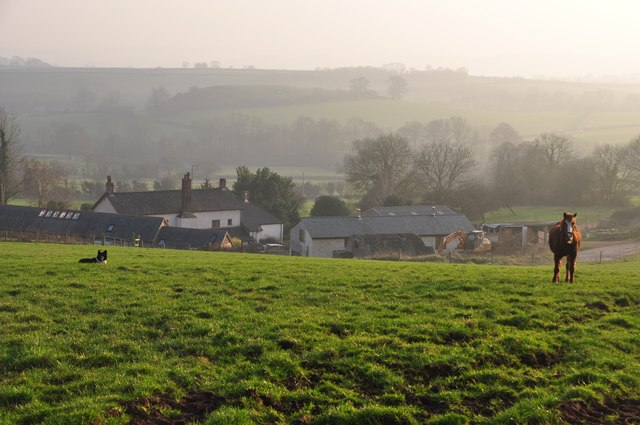 Mid Devon : Grassy Field near Whitnage
