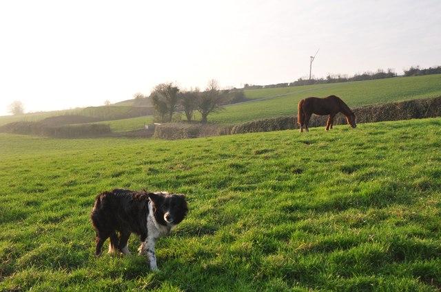 Mid Devon : Grassy Field, Dog & Horse