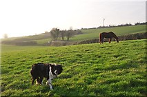 ST0215 : Mid Devon : Grassy Field, Dog & Horse by Lewis Clarke