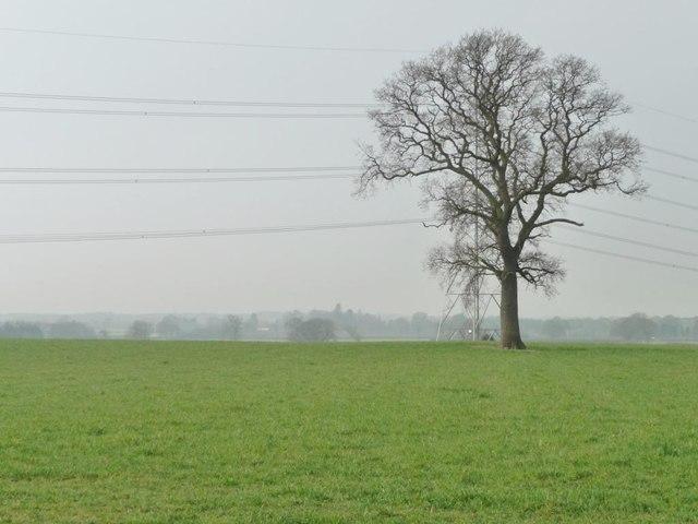 Winter tree hiding a pylon