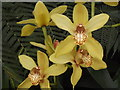 TQ0658 : Yellow Orchids by Colin Smith