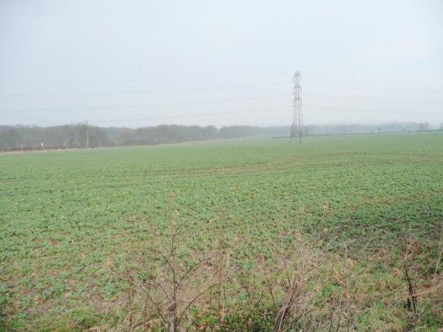 Edge of a crop field