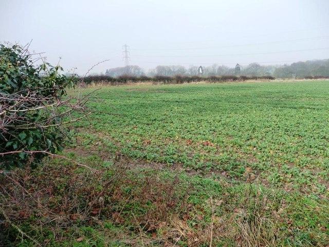 Corner of a crop field