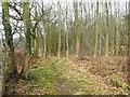 SE7262 : Permissive path through the woodland by Christine Johnstone