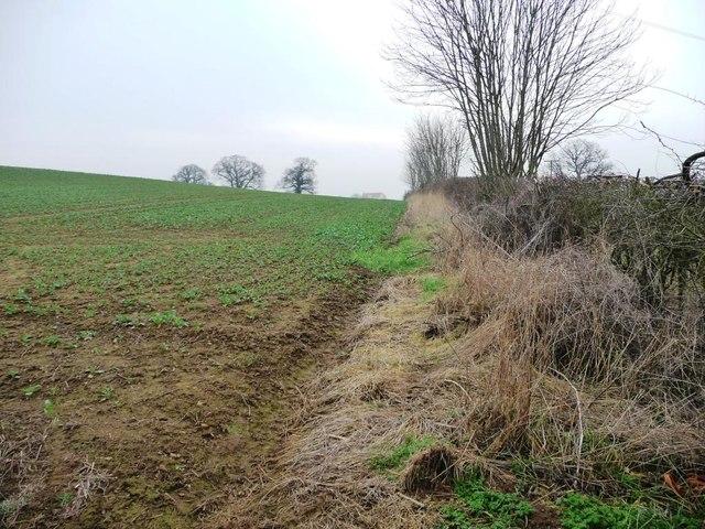Field edge alongside High Lane