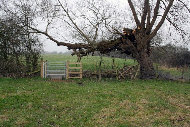 Footpath gate under pollarded willow