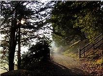 TQ1450 : Along the Pilgrims' Way, east of Landbarn Farm (1) by Stefan Czapski