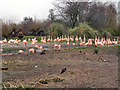 SO7104 : WWT Slimbridge, South American Flamingos by David Dixon