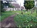 SU2423 : Daffodils in the churchyard, Whiteparish by Maigheach-gheal