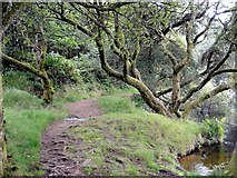 SX6870 : Footpath by the Shore of Venford Reservoir by Tony Atkin