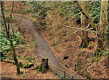 J4681 : Path, Crawfordsburn Country Park (5) by Albert Bridge
