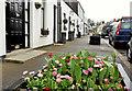 J4681 : Floral tubs, Crawfordsburn by Albert Bridge