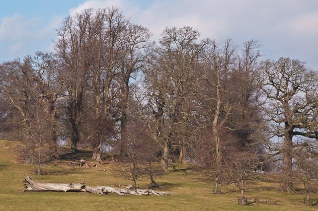 Studley Royal