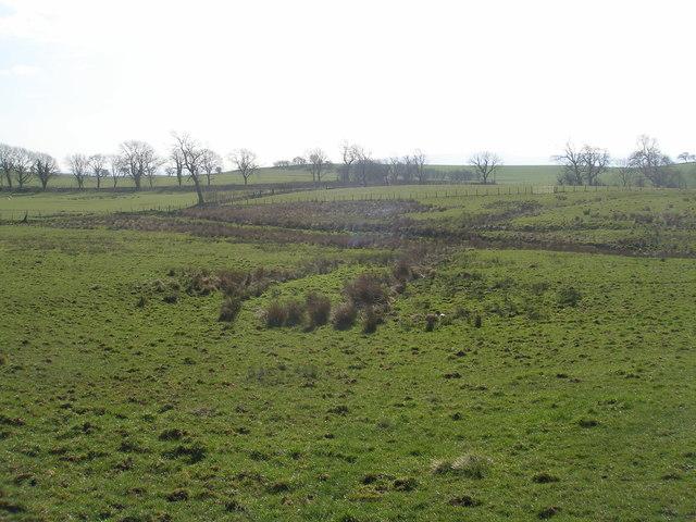 Enclosure on Swinden Moor