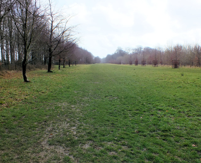 Bayley's Coppice