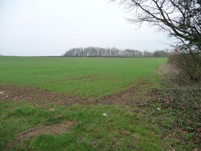Corner of a greening field