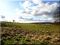 NS8062 : Bothwellshields Road [2] by Robert Murray
