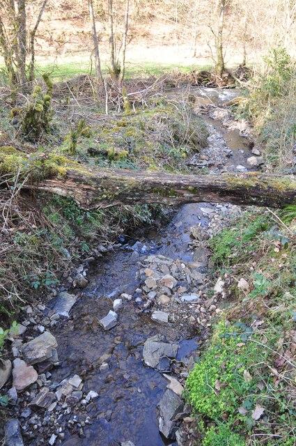 Mid Devon : Stream in Chample's Wood