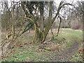 SU7333 : Selborne Common by Colin Smith