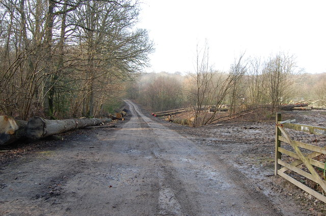Entrance to Combwell Woods