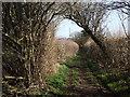 SU7134 : Upper Farringdon Ridgeway by Colin Smith