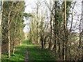 TL3554 : Armshold Lane: towards Toft by John Sutton