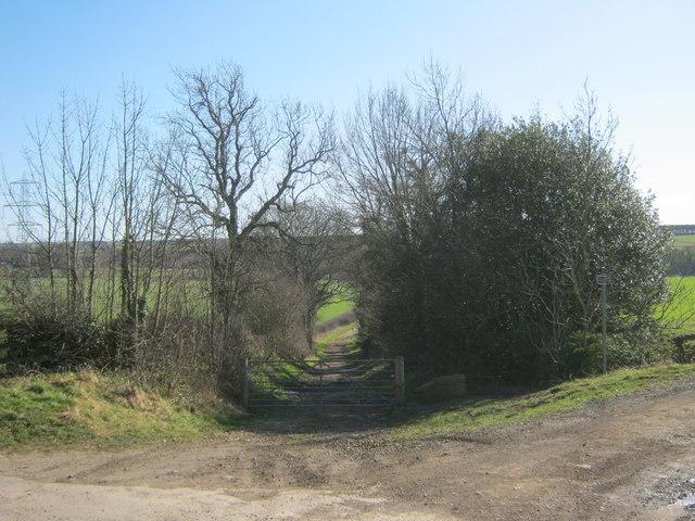 Scripton Lane leading down to the River Wear