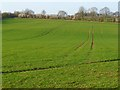 SU4538 : Farmland, Wonston by Andrew Smith