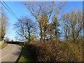 ST3594 : The road near Llwyncelyn by Ruth Sharville