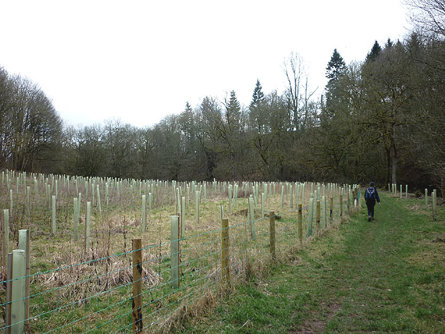 New woodland by the Lyvennet