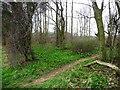 SE4330 : Unmapped path across Sheepcote Wood by Christine Johnstone