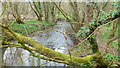 ST7094 : The Little Avon at Damery by Jonathan Billinger