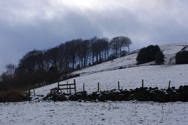 Winter trees at Brock Holes, above Cragg Vale