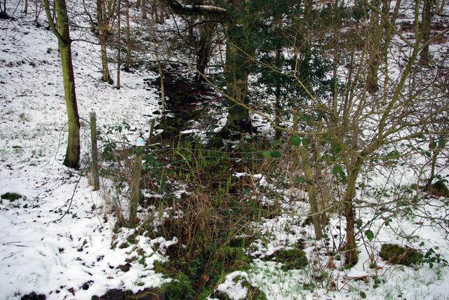 Spring in Martin Wood, Mytholmroyd