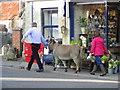 ST9429 : Walking the donkey, Tisbury by Maigheach-gheal