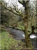 SK1258 : Beresford Dale, River Dove by hayley green