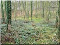 SE4530 : Greening woodland floor in early Spring by Christine Johnstone