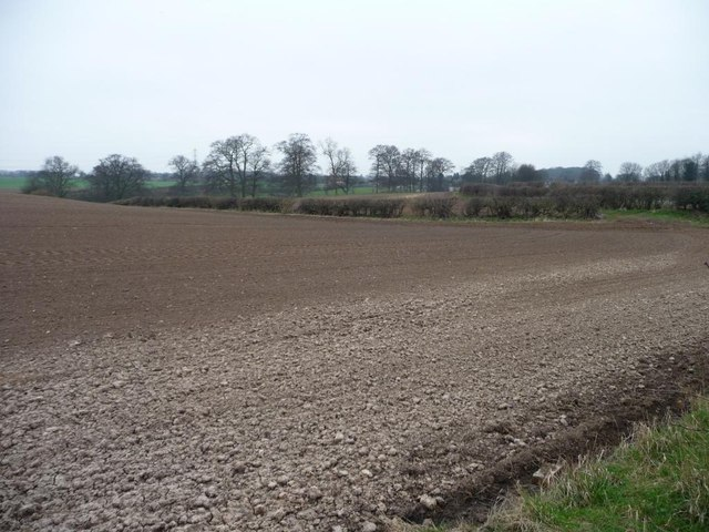 Bare field south of Holy Rood Lane